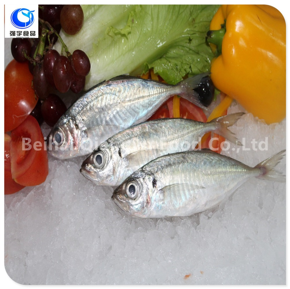 Frozen Style and Bulk Pack Packaging Fresh Frozen Seafood Horse Mackerel