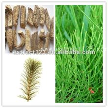 High quality Herb Horsetail P.E.(Equistum Arvense L. ) with Silica acid for Pharmaceutical Grade