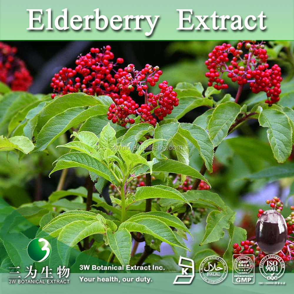 Free Sample Black Elderberry Extract,Black Elderberry Berry Extract Powder 4:1 10:1