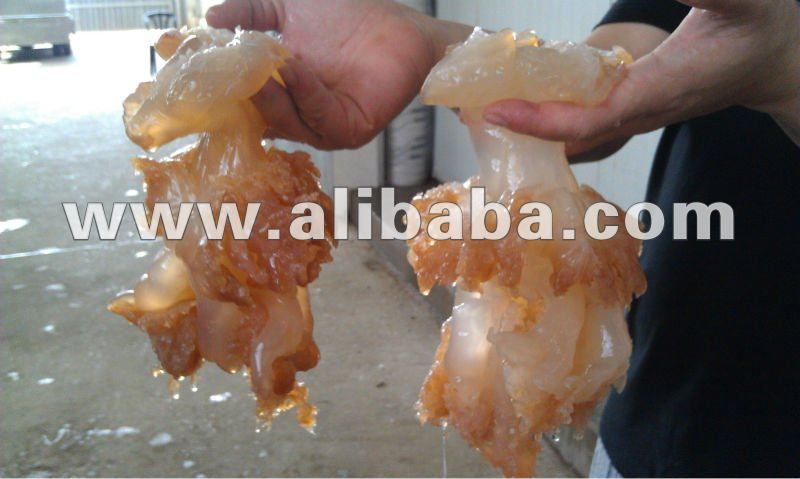 Salted Jellyfish - china type (body)