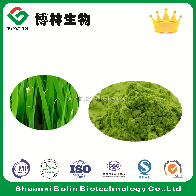 Organic Barley Grass Juice Powder for Beverage and Drink