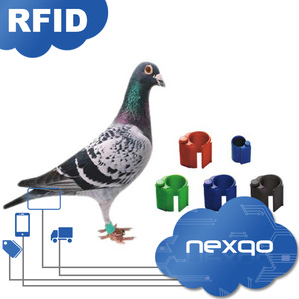 Rings tag for racing pigeon tracking