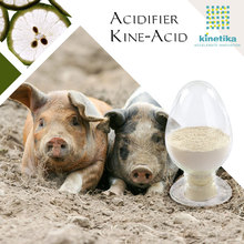 Animal nutrition products feed additives good for digestive system top acidifier