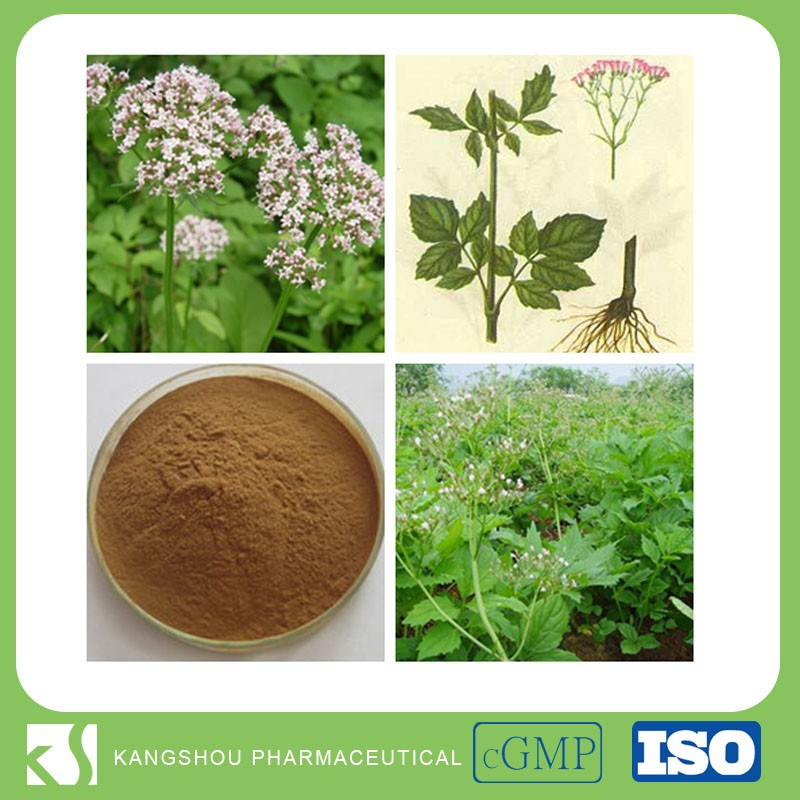 China Supplier provide Natural Sedative Valerian root extract Powder with Valeric Acid 0.3-0.8%