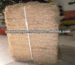 VIET NAM SUGAR CANE BAGASSE _CHEAPEST PRICE(Ms Mary - mary@vietnambiomass.com)