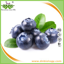 Bilberry Extract/European Bilberry Extract standardized on anthocyans/Anthocyanidins 25% from pure bilberry Extract in powder fo