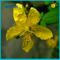 natural product Perforate St.John's wort Extract benefits hypericum