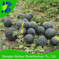 2017 Hot sale Black seedless watermelon seeds for growing