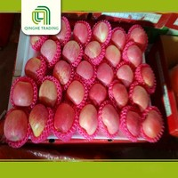Shandong Qixia fresh red fuji apples with great price