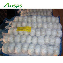 china fresh garlic specification
