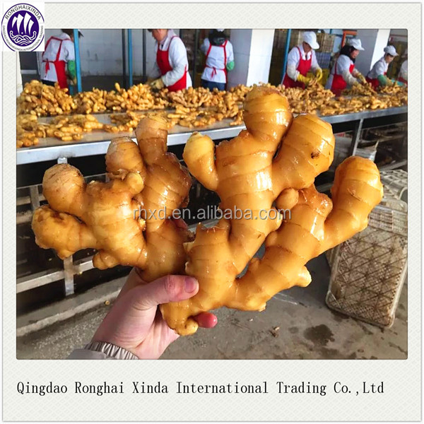 2016 fresh ginger market price /price of fresh ginger /new crop fresh ginger