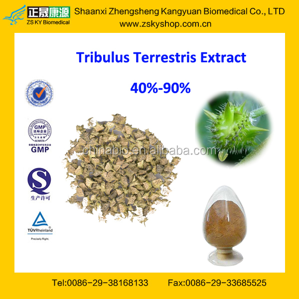 GMP Factory Supply High Quality Tribulus Terrestris Extract Powder 90% Saponins