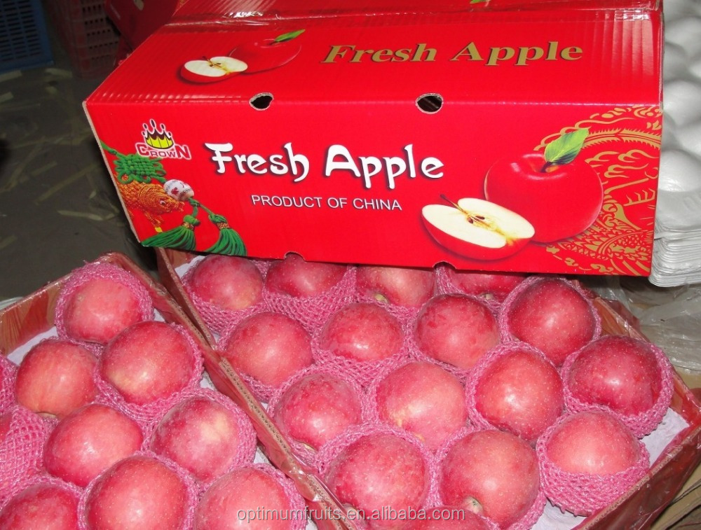 fresh fuji apple exporter in China