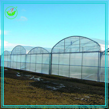 Agriculture PE PVC Tunnel Arch Greenhouse for vegetable cultivation