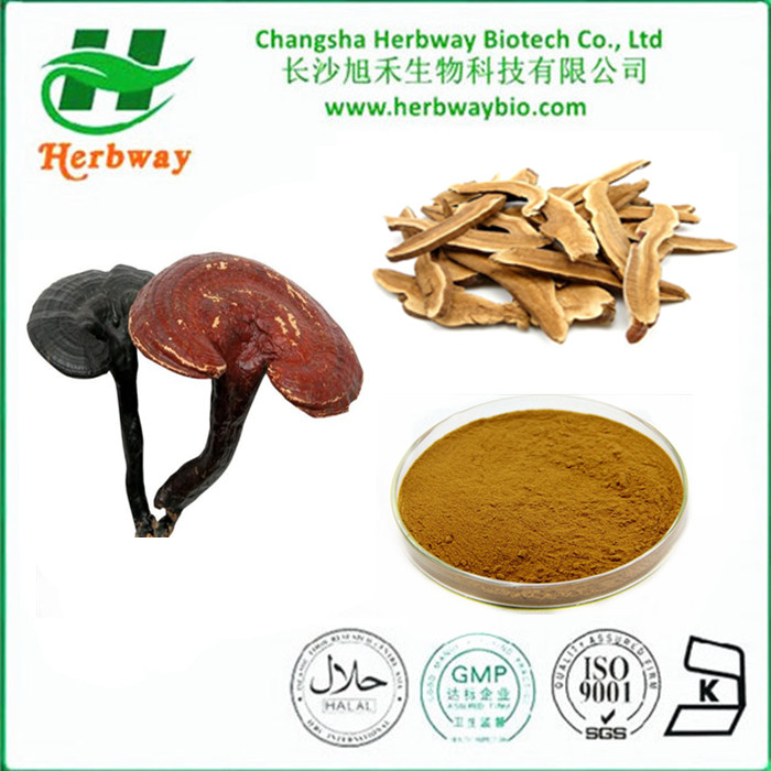 Top quality Reishi Mushroom extract for sale