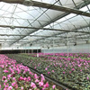 High Tech Greenhouses And Hydroponic Systems