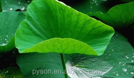 high quality lotus leaf plant extract supplier
