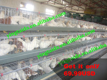 metal wire mesh chicken houses for sale ( ISO9001 factory)
