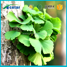 2015 star product Health product ginkgo oil extract from acetar company