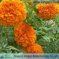 Lutein 5-90% HPLC--Calendula Officinalis Flower Extract