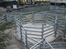 Beef cattle yards for less than 100 head