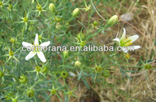 Great quality Syrian rue Extract,Syrian rue,Syrian rue Extract powder