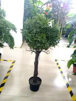 SJ Artificial Milan Grass Topiary ball Tree, Decorative Tree, Fake Milan Tree Made in China
