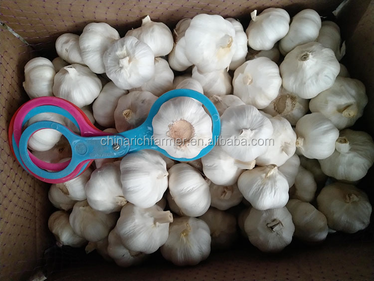 Chinese 3ps purple white cold store garlic is popular