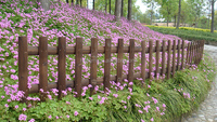 outdoor wood rail fence