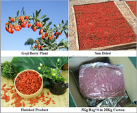 Buy dried goji berries from farm