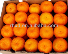 Fresh Ponkan <strong>Orange</strong> Fruit from Chinese farm factory