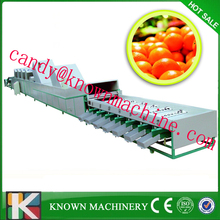fruit washing and polishing machine
