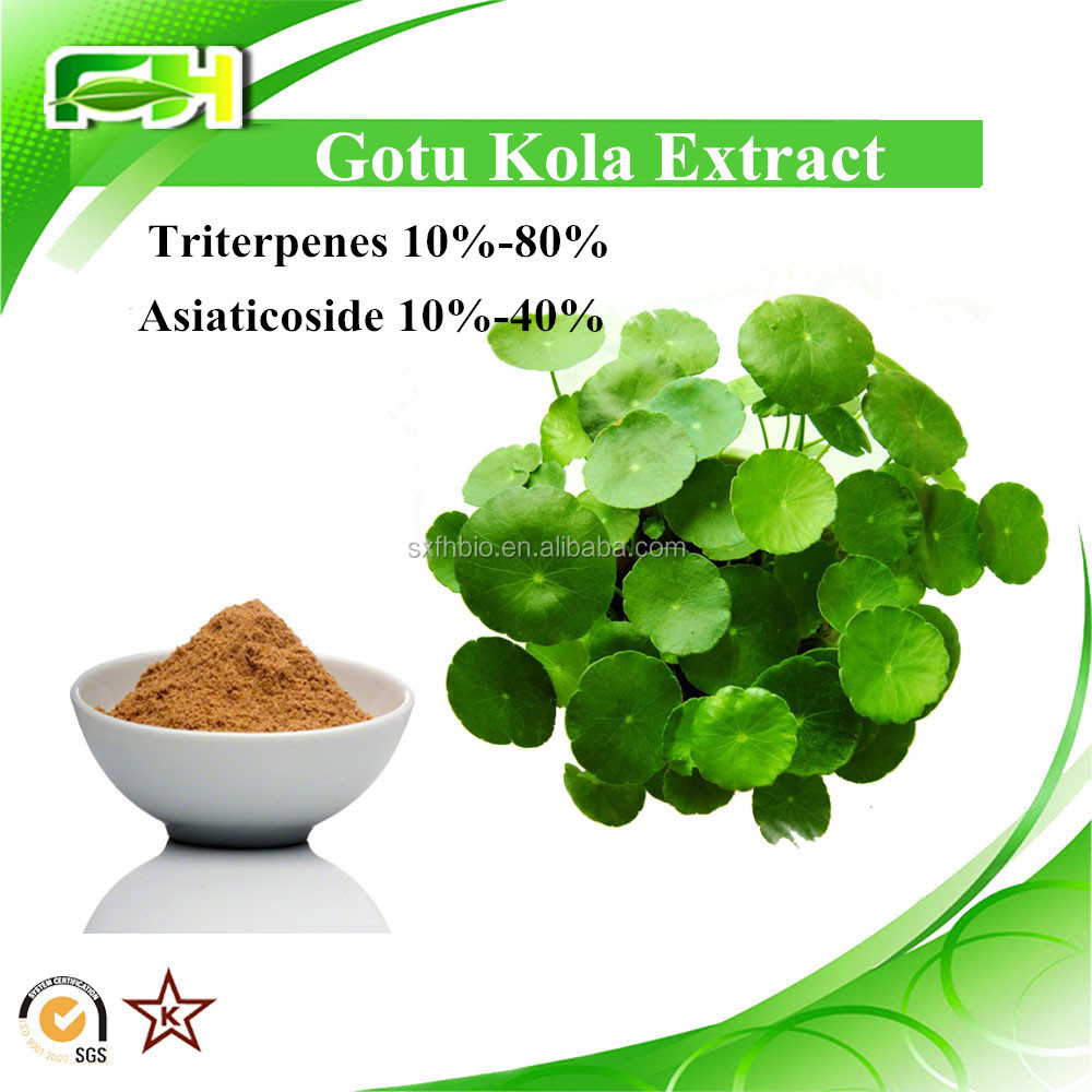 For sales Gotu kola extract 10%-80% Triterpenes