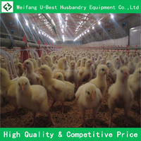 industrial shed steel structure building design poultry farm shed chicken house for layers