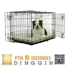 English bulldog puppies dog kennel