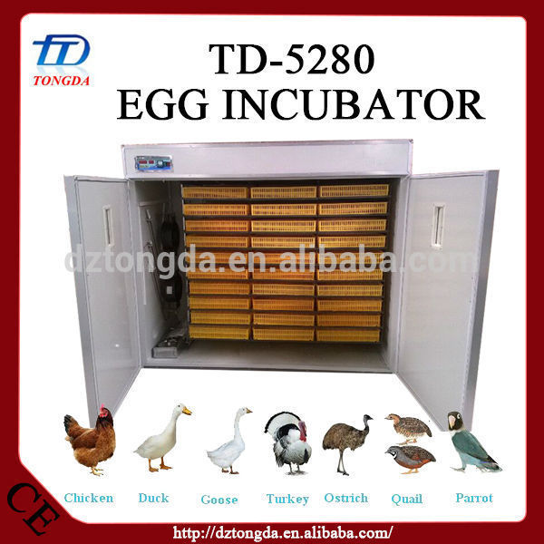 New design emu hatching with great price