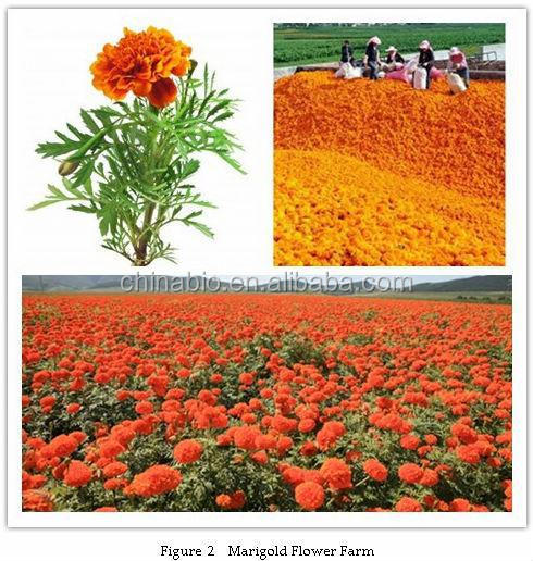 Main Product Lutein from Marigold Flower Extract