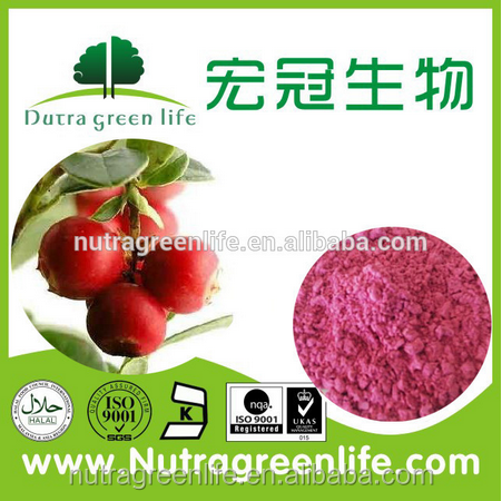 Fresh cranberry plant extract powder/Vaunium Macrocarpon L. p.e.