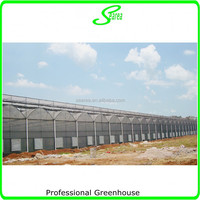 agricultural used greenhouse manufacturer