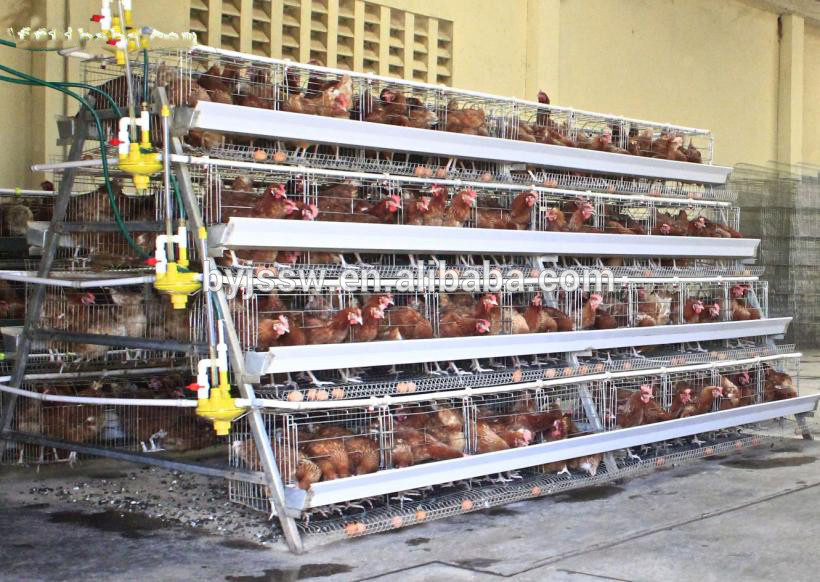 Wire Mesh Cage Wholesale For Meat Chicken And AType Broiler Cages