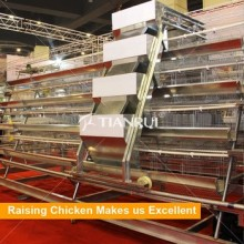 Automatic poultry equipment/battery chicken cages laying egg chicken