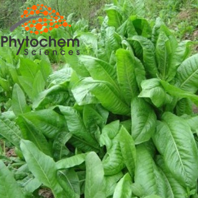 Pure chicory root extract 90% Inulin