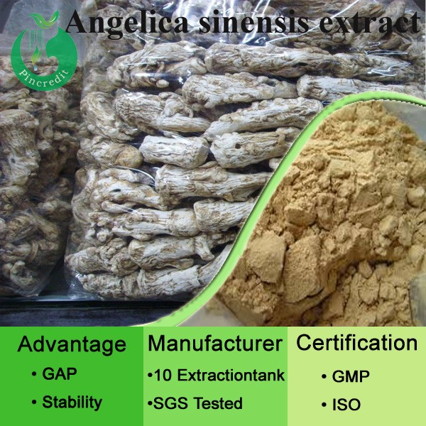 Female health care dong quai extract angelica root extract