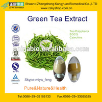 Factory Supply Top Quality Camellia sinensis Extract