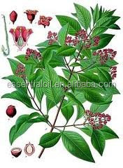 aromatic essential oil 60% eugenol Bay leaf oil