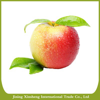 Apple fruit exports