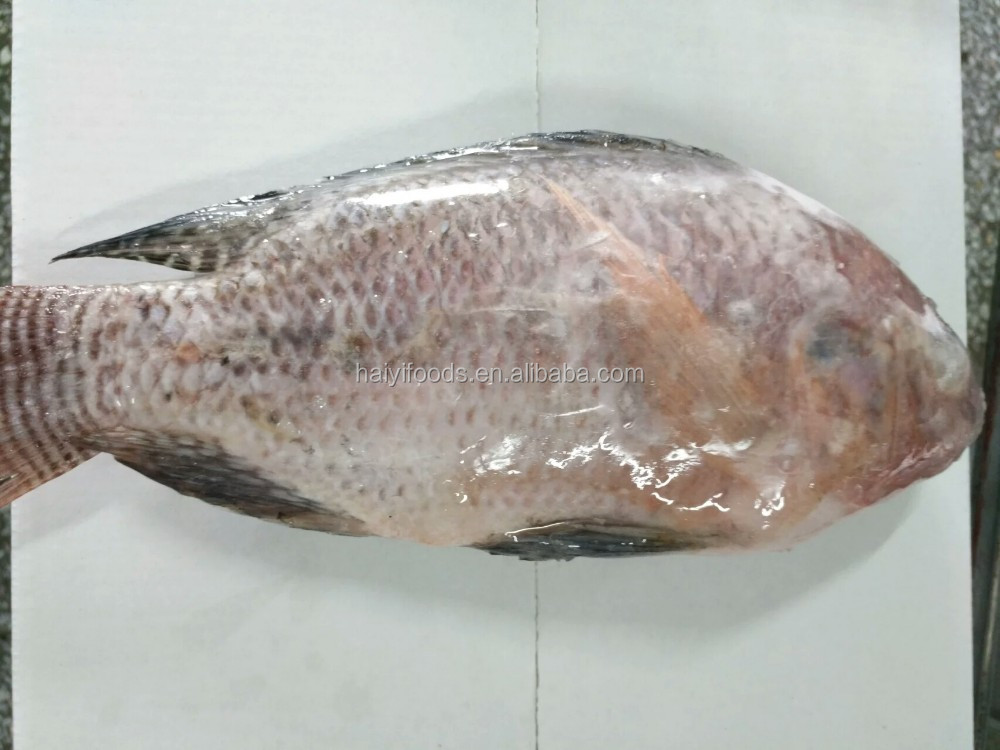 fresh fish hot sale gutted and scaled wholesale frozen tilapia