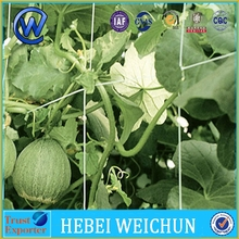 factory direct price extruded plastic pea and bean net climbing plant support net American pea &bean wire mesh