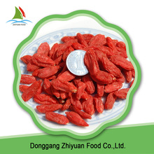 High quality fresh goji berries for free sample goji