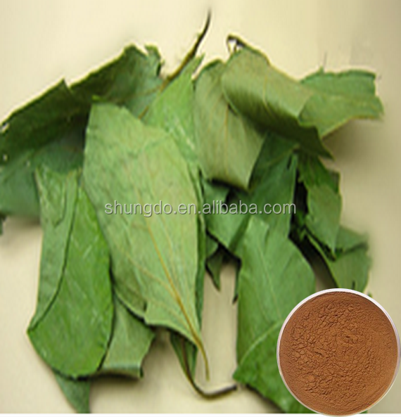 Natural persimmon leaf P.E powder with Total flavone